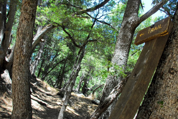 Observatory Trail, Palomar Mountain