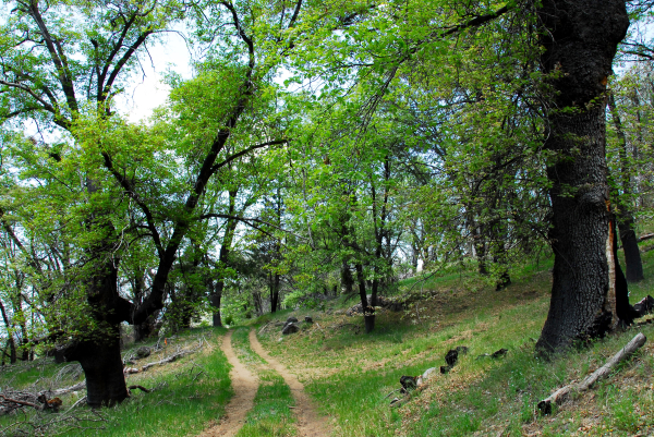 Take your dog on Palomar Mountain Trail